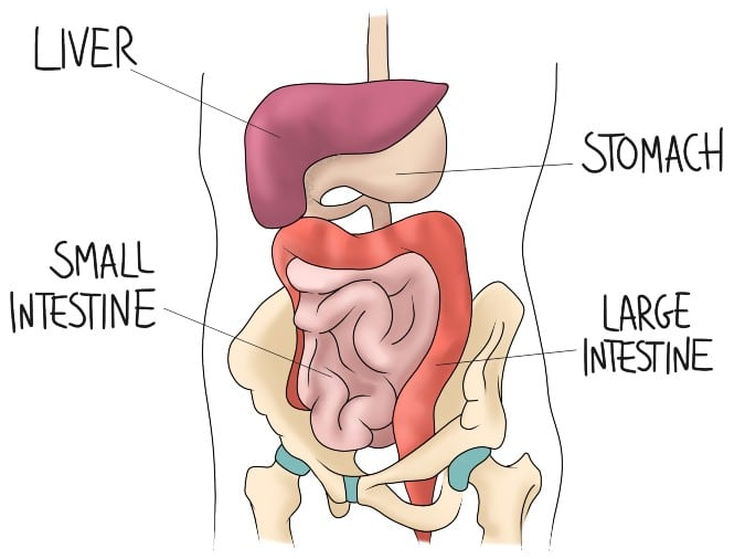 What are the benefits of osteopathy to digestion